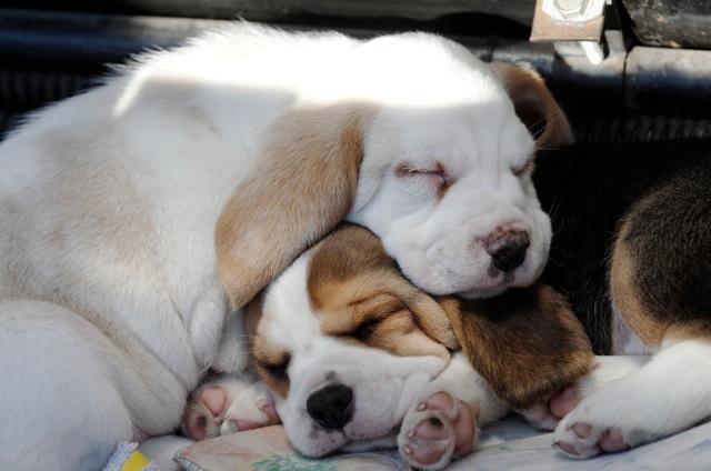 Soorten Honden Klein er Zijn Twee Soorten Honden